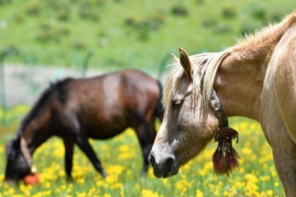 2020西藏嘉乃玉错国家湿地公园门票交通 嘉乃玉错国家湿地公园旅游攻略