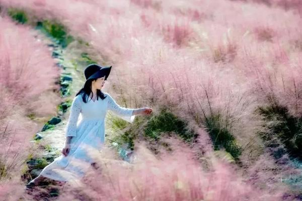 武汉哪里有粉黛子草?