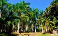 西双版纳热带花卉园简介 西双版纳热带花卉园什么时候去最好