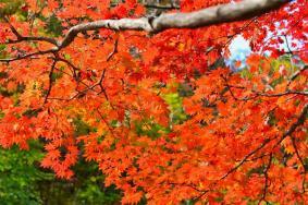 2020红叶国家森林公园景点介绍 红叶国家森林公园门票及交通