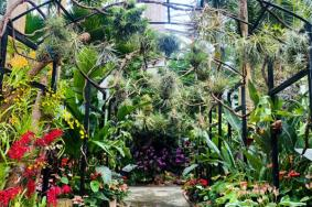 上海植物园国庆期间有什么花展2020