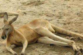 2020上海长隆野生动物世界国庆门票半价和游玩攻略
