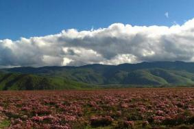 2020白马雪山旅游攻略 白马雪山门票交通天气景点介绍