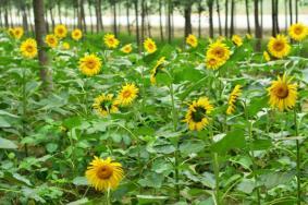2020十一厦门国庆赏花可以去哪里