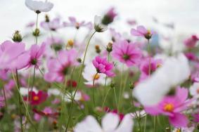 厦门哪里可以赏花 厦门赏花好去处
