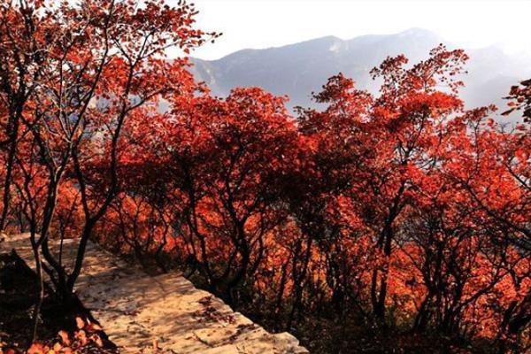 北京红叶最佳观赏地方 有哪些