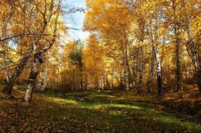 2020新疆桦林公园门票交通天气 桦林公园旅游攻略