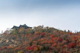 北京北宫国家森林公园红叶红了吗 观赏时间及攻略一览