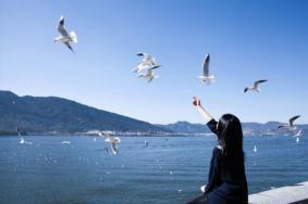 重庆自驾游去云南旅游最佳路线