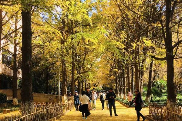 云南大学旅游攻略 景点介绍