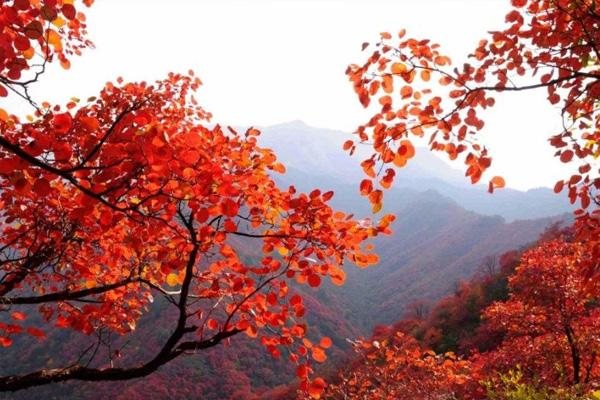 北京香山紅葉節的時間2020 萬圣節活動匯總