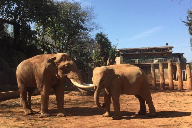2020昆明动物园旅游攻略 昆明动物园景点介绍