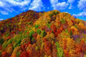 北京西山國家森林公園紅葉紅了嗎 最佳觀賞時間一覽