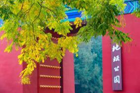 北京秋天銀杏樹哪最美 北京秋天去哪里玩比較好