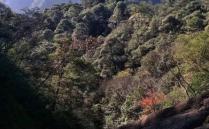 2020梅树村自然保护区旅游攻略 梅树村自然保护区旅游时间