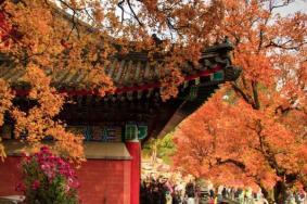 北京香山公園好不好玩 景點推薦