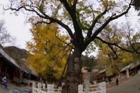 北京看紅葉的地方都有哪些