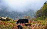 黑竹溝國家森林公園有什么好玩的