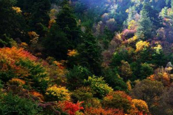 四川米亞羅紅葉風景區最佳旅游時間 自駕游攻略