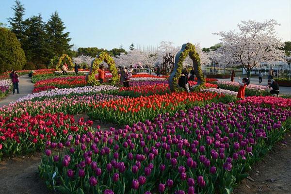11月-12月上海植物園賞花攻略