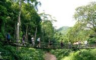 西雙版納原始森林公園旅游攻略 門票多少錢