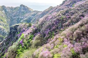 2020大黑山風景區門票交通及地址 大黑山風景區旅游攻略