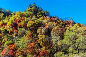 2020楓林谷森林公園旅游攻略 楓林谷森林公園門票交通及地址