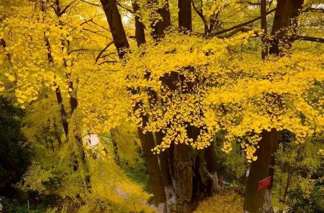 秋季成都大邑縣旅游景點美食推薦