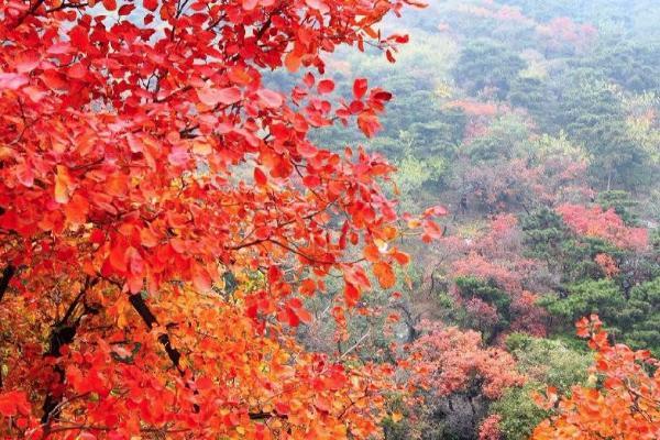 11月賞秋國內有哪些景點 11月旅游的最佳地方