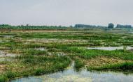 沭河濕地公園門票多少錢 景區介紹