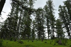 2020龐泉溝自然保護區門票交通及地址 龐泉溝自然保護區旅游攻略