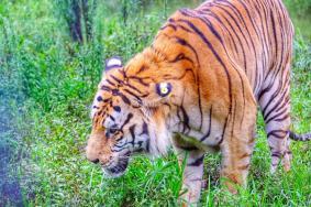 2020安徽黃山虎林園門票交通天氣 黃山虎林園旅游攻略