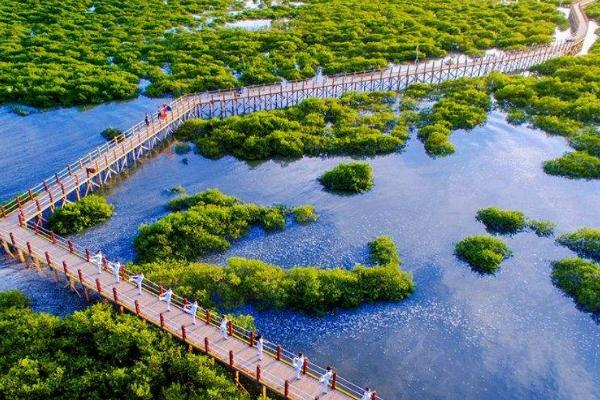 金海湾红树林生态旅游区在哪里 门票信息及交通攻略