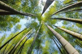 2020九龍竹海國家森林公園旅游攻略 九龍竹海國家森林公園門票交通天氣景點