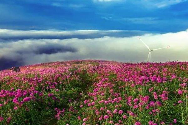 2020云上花海旅游攻略 云上花海有什么好玩的