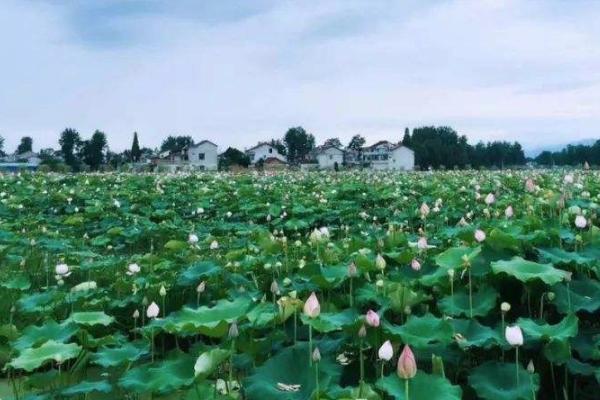 2020异龙湖万亩荷花园旅游攻略 异龙湖万亩荷花园交通信息