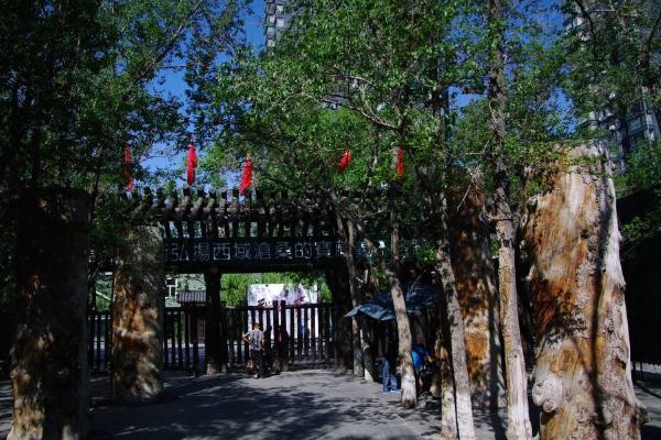 烏魯木齊九龍生態園好玩嗎 門票信息及交通指南