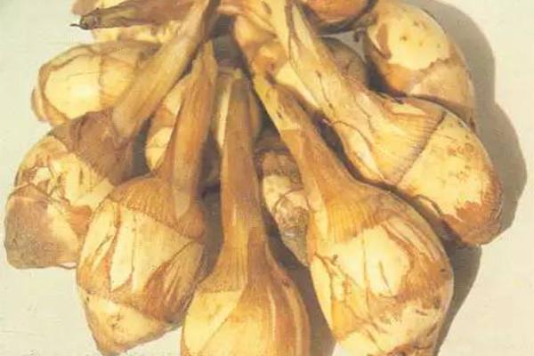 臺山特產有哪些 冬天適合吃什么臺山特產