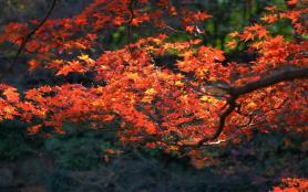 2020上海秋霞圃紅葉什么時候看最好