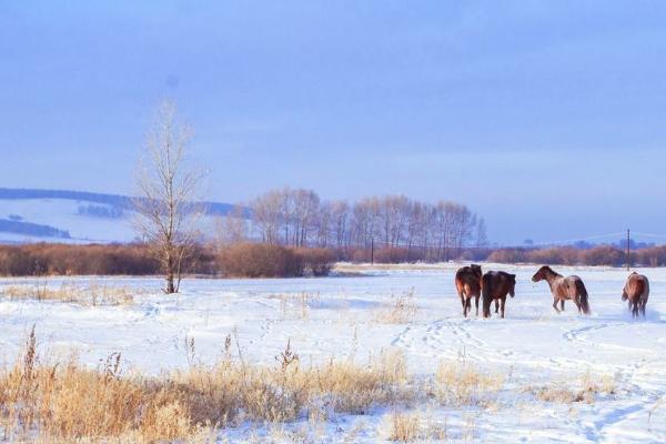 12月看雪的好去處 看雪去哪里看比較好玩