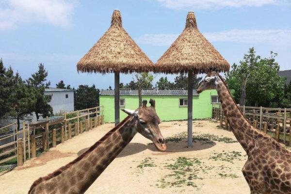 青岛动物园门票多少钱 青岛动物园开放时间