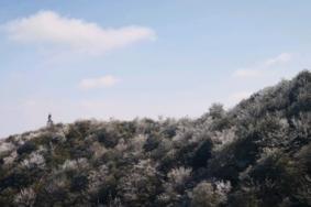 2020牙梳山自然保護區旅游攻略 牙梳山自然保護區門票交通天氣