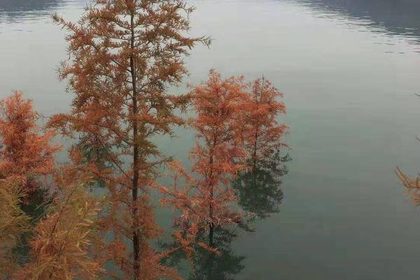 三峡再现水中森林景观,一起看看吧