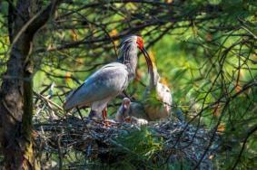 2020董寨国家级自然保护区旅游攻略 董寨国家级自然保护区景点介绍门票天气