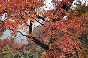 2020廣州石門森林公園什么時候去最好 附最佳觀賞期