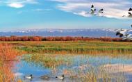 卤阳湖国家湿地公园门票多少钱 卤阳湖国家湿地公园简介