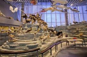 2021上海静安有哪些博物馆值得去 上海博物馆推荐