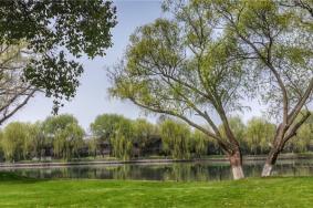 2021上海西郊淀山湖湿地地址交通及游玩攻略