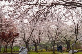 2021上海各大公園2月份花展活動一覽