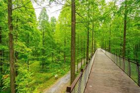 黃海森林公園門票 黃海森林公園在哪里